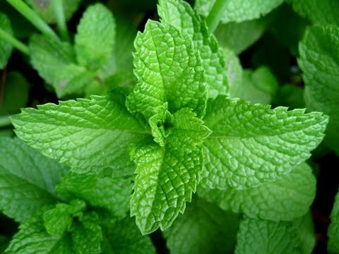 3 Natural Home Remedies for Gallstone/gatllstone pain treatment