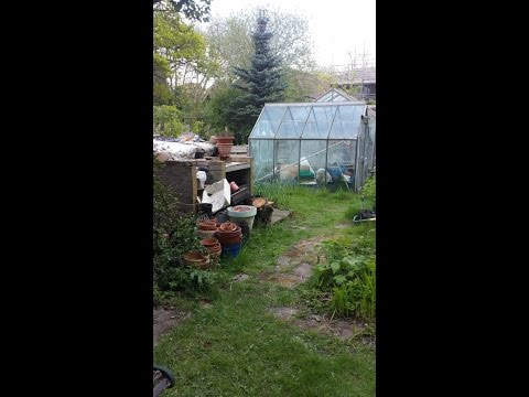 My allotment. A piece of heaven in north London