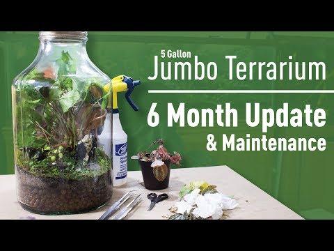 Jumbo Terrarium  6 MONTH Update & Maintenance