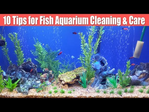 10 Tips for How to clean fish aquarium/tank hindi, Fish Tank Ka Pani Kese Change, Aquarium medicine