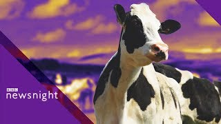 No-deal Brexit: '45,000 dairy cows could be culled' - BBC Newsnight