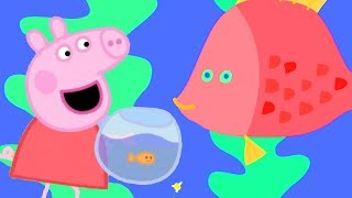 Peppa Pig English Episodes | Peppa Pig Finds a Friend for Goldie | Peppa Pig Official