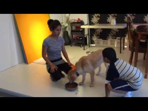 Adopt Mary's Dogs - Ah-Q no food aggression