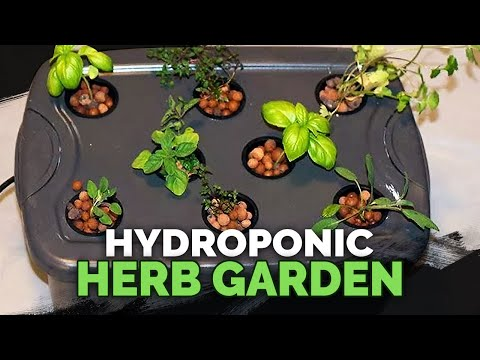 Hydroponic Herb Garden Guide