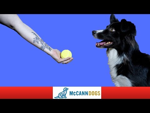 How To Train Your Dog To Drop A Ball- DIRECTLY Into Your Hand!
