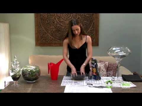 Build a Terrarium - Laying Down the Foundation