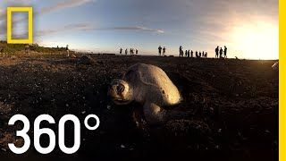 Sea Turtles Nesting in Costa Rica - 360 | National Geographic