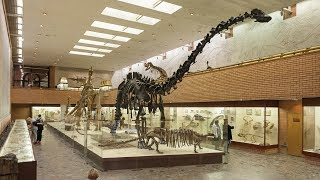 BIGGEST Prehistoric Animals: 25 To Have [Ever] Existed