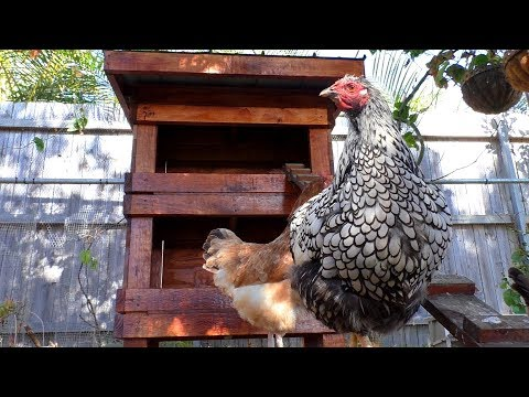 Build a Chook Laying Box with Upcycled Materials