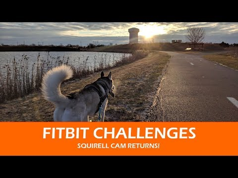 FitBit Challenges and Squirrel Cam Returns