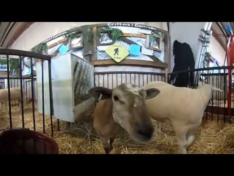 Kids Carnival Animals - VR Yelling Goats in Your Face!