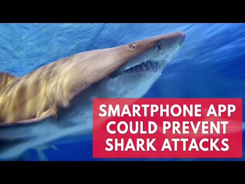 New smartphone app Clever Buoy could prevent shark attacks