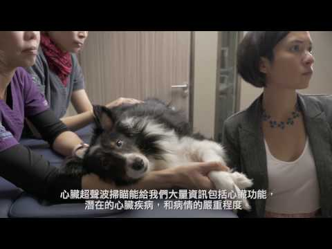Echocardiography for the Diagnosis of Heart Disease - Veterinary Specialty Hospital of Hong Kong