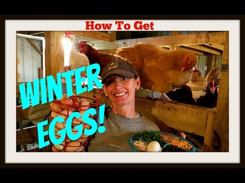 How To Get Winter Eggs~