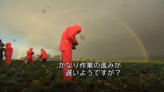 野菜の収穫に英国の若者が挑戦 手が、鼻が……