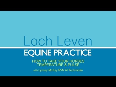 HOW TO TAKE YOUR HORSES TEMPERATURE & PULSE WITH LOCH LEVEN EQUINE PRACTICE