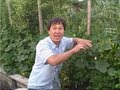 How To Prune Your Cucumbers To Grow Them Vertically Up A Tre