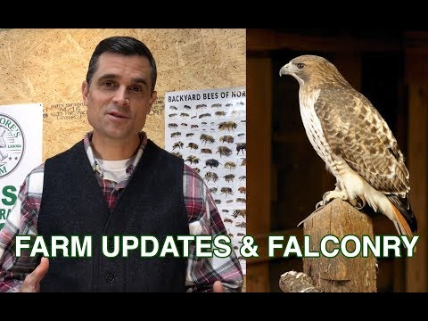 FARM UPDATES & FALCONRY (100th Upload)