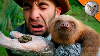POOPING A SLOTH!