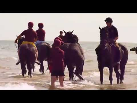 Horse Beach Safety - Dangers Of Horses In Water - Pain Bits & Water Don't Mix