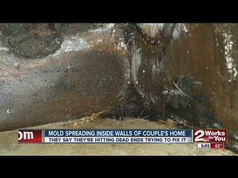 Mold Spreading Inside Walls Of Home