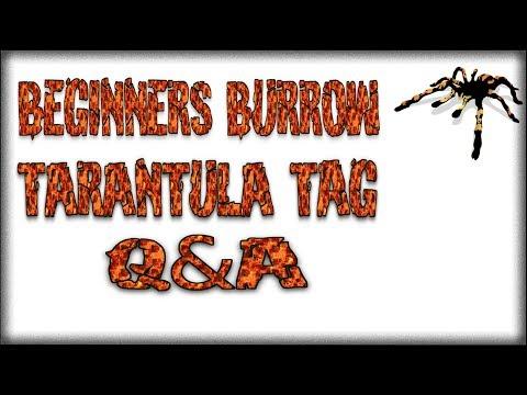 Tarantula Tag Q&A - Beginners Burrow