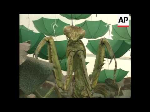 China - Exhibition of giant insects