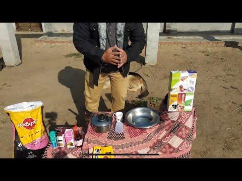 Pet Care  - Pregnant female Dog Diet - Bhola Shola