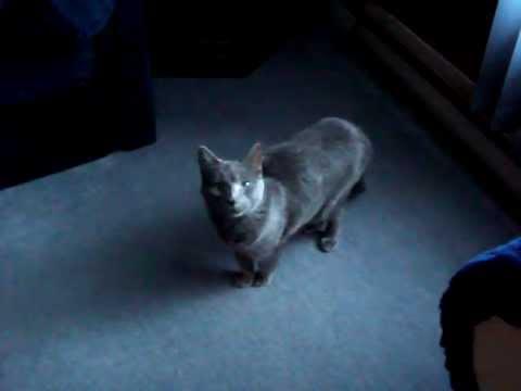 Spanking Kitty Cat