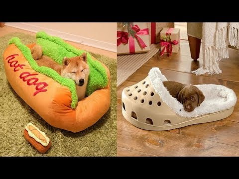 Most Amazing and Unique Pet Beds You Can Actually Buy |