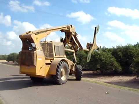 Trimming Texas Citrus Trees
