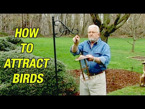 How to Attract Song Birds