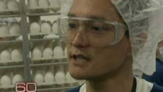 Inside Look At H1N1 Vaccine Production