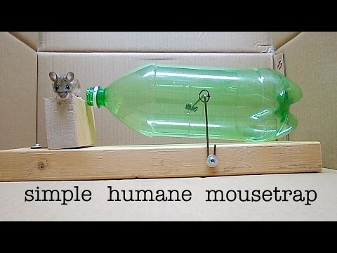 How to Make a ● Simple Catch and Release Bottle Mousetrap ( that works ! )
