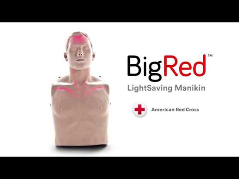 The BigRed CPR Manikins for students