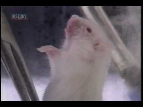 Mouse breathing water
