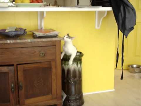 Cat magic trick.mov