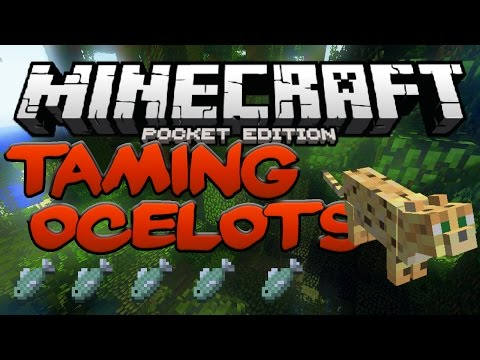 HOW TO TAME OCELOTS IN Minecraft PE - MCPE Taming Cats (Pocket Edition)