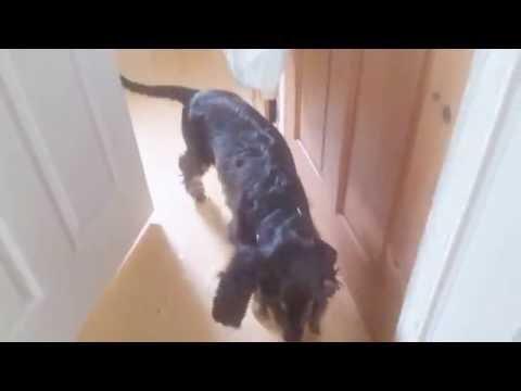My dog keeps licking himself on camera   vlog