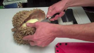 Opening a Durian Fruit