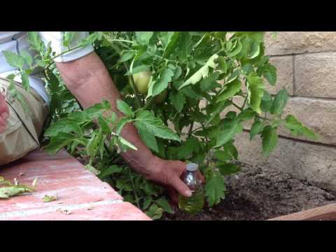 How to keep rodents off your vegetable plants!!!