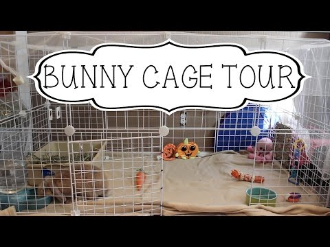 Bunny Cage tour