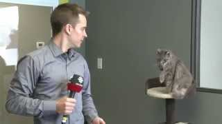 CBC reporter interrupted by cat