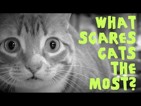 What Scares Cats the Most?