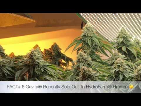 2018 best cannabis led grow lights