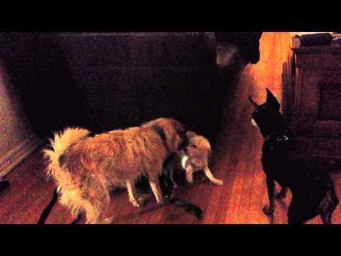 Mighty Luke vs Buppie de Puppy - CUTENESS OVERLOAD!