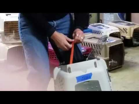 Feral cat netting