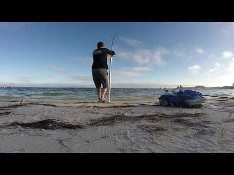 Bull Redfish on cut bait