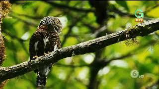 Disfrute Caminar Por La Selva Y Observar Las Especies Naturales