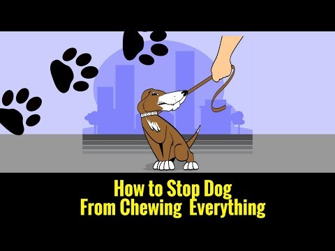 How to Stop Dog From Chewing Everything